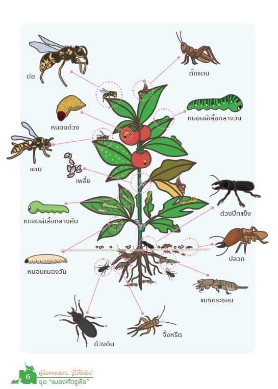 """แจกฟรี คู่มือเกษตรกร """"รู้ไว้ใช้จริง"""" ชุดความรู้ในการกำจัดแมลงศัตรูพืช"""