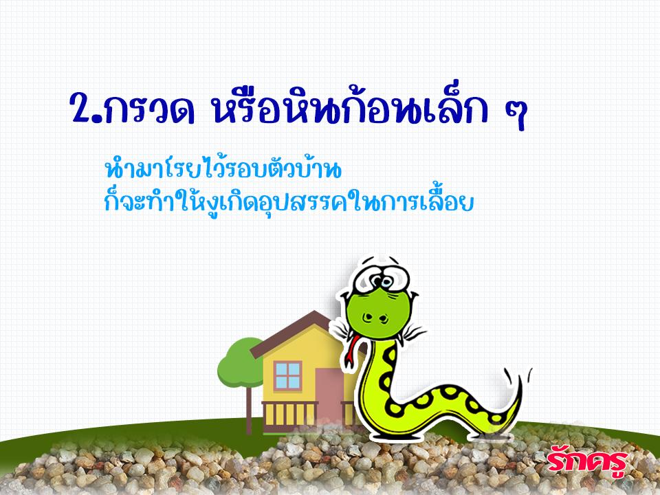 10 วิธี ป้องกันงูเข้าบ้านพักครู